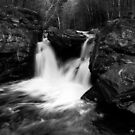 Mill Falls Monochrome by Wayne King
