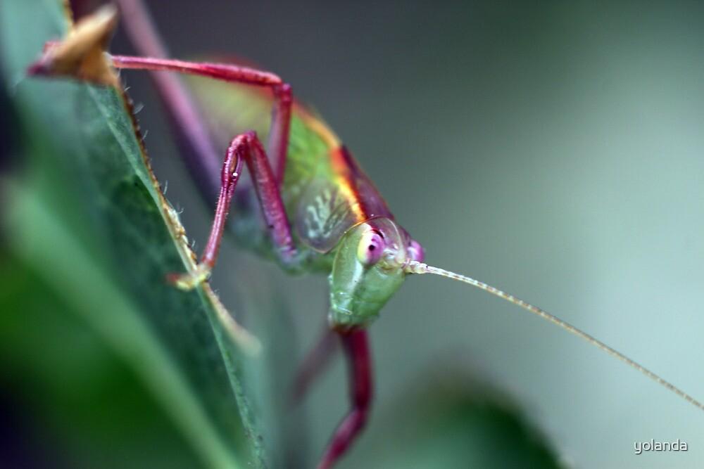 Grasshopper on Leaf by yolanda