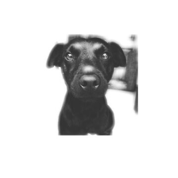 Patterdale Terrier Dog Owner by BrchtV