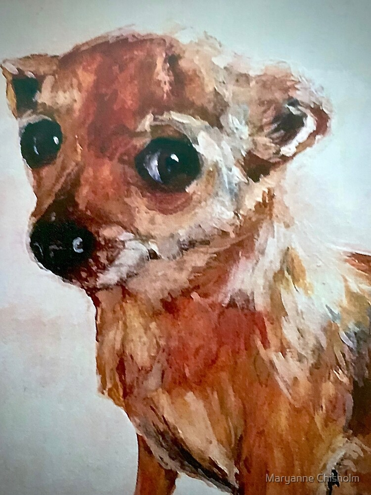 The Moment of Remorse of the Chihuahua  by Maryanne Chisholm