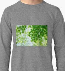 Green leaves of Japanese maple Lightweight Sweatshirt