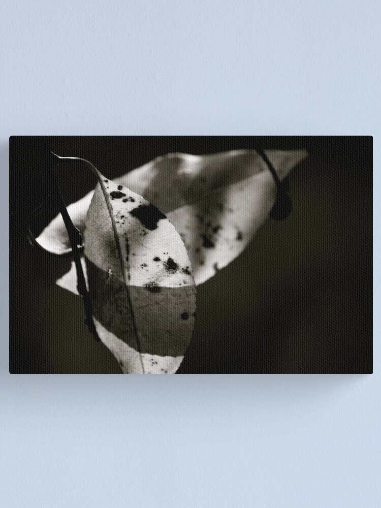 Alternate view of Leaves in Light & Shadow Canvas Print