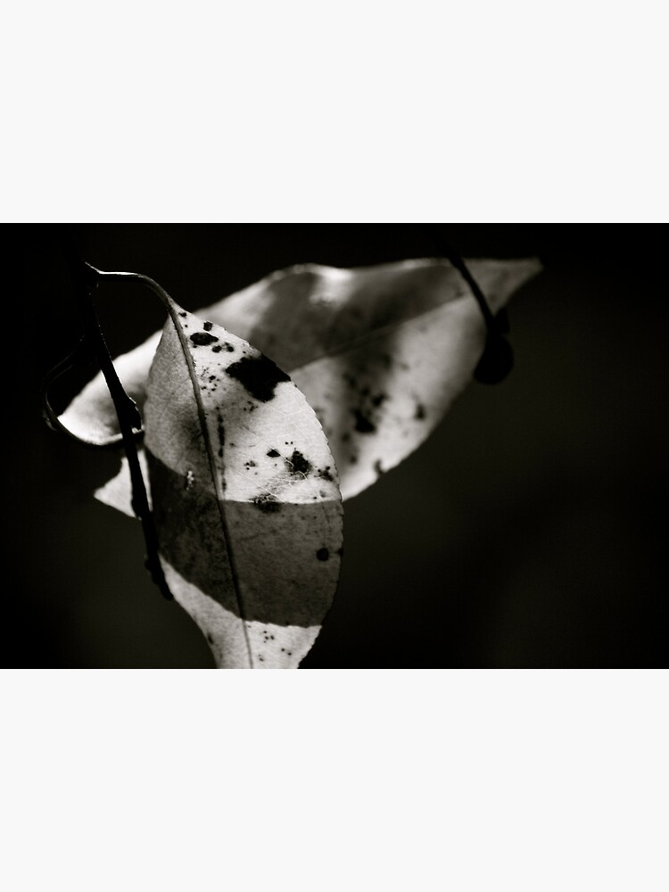 Leaves in Light & Shadow by LynnWiles
