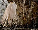 Proud Bird by LudaNayvelt