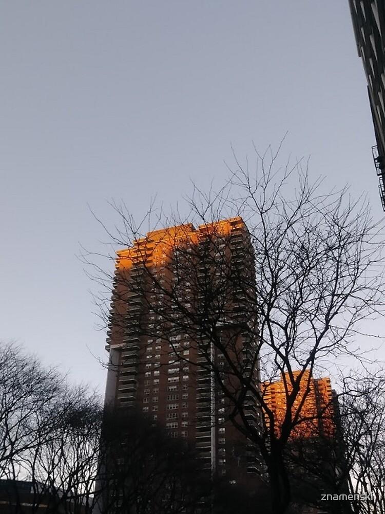 #NewYorkCity #NYC #NewYork #NY #Manhattan #skyscraper #tower #tree #architecture #outdoors #city #sky #environment #vertical #colorimage #nopeople #builtstructure #day #lightnaturalphenomenon #modern by znamenski