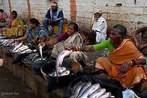 FISH MARKET by RakeshSyal