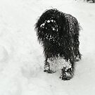 Samson in the snow by Hans Bax