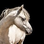 White Pony by Lisa Hands