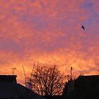 Sunrise Between The Rooftops by lezvee