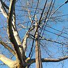 #NewYorkCity, #Manhattan, #Brooklyn, #NewYork, #City, #architecture, #street, #building, #tree, #car, #pedestrian, #skyscraper, #evening, #sunlights by znamenski