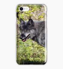 """""""The Pathfinder"""" Grey Wolf Photography iPhone Case/Skin"""