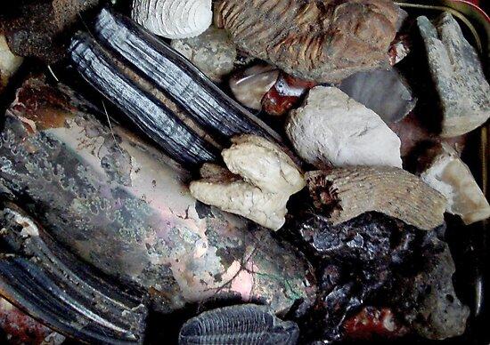 Needful Things - Fossils by May Lattanzio