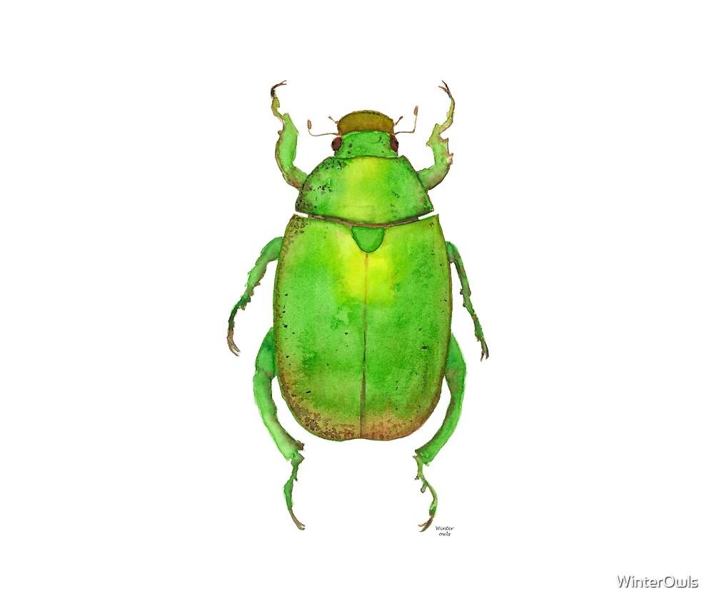 Australian Christmas Beetle.Green Australian Christmas Beetle By Winterowls Redbubble