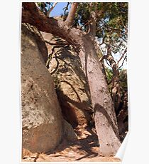 Brown and Umber : Rocks at Melville Caves Poster