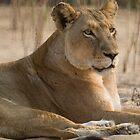 Lioness 2 by Erik Schlogl