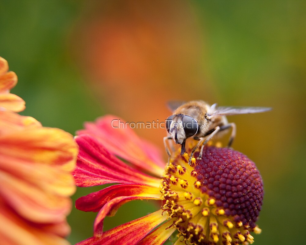 Nectar on the Menu by ChromaticTouch