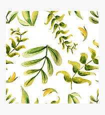 Herbaceous greens watercolor - green leaf Photographic Print