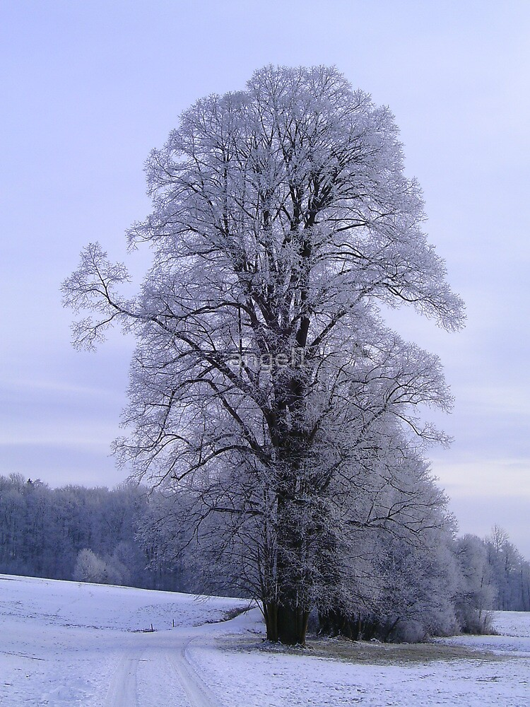 Cold Frosty Morning by ©The Creative  Minds