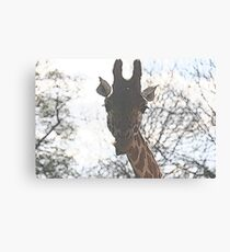 What you lookin' at? Canvas Print