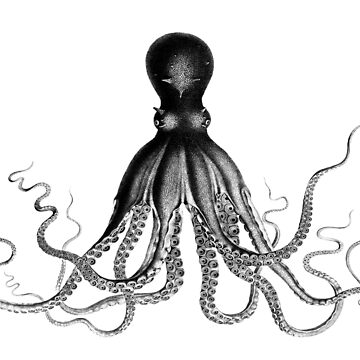 Octopus Vintage Illustration, black white by YLGraphics