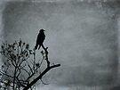 Majestic Crow by FrankieCat