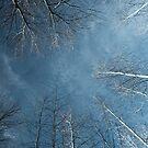 Woodland whisperings. by James Ingham