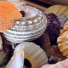 colourful shells by leahb