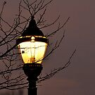 Spartan Street Light at Founder's Hall, Hershey, PA by Corkle