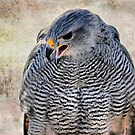Don't Make Me Angry! by Barbara Manis