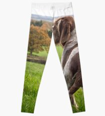 Italian Spinone Puppy Portrait Leggings