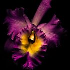 Orchid by alan shapiro