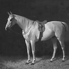 White vintage horse tacked up in stable by Epic Splash Creations