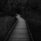 Pathways by Tim  Geraghty-Groves