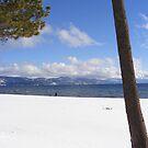 Snowy Beaches by NancyC
