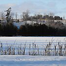 Winter Landscape- Keene Ontario Canada by Tracy Wazny