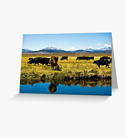 Cows of the Sierras Greeting Card