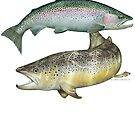 Brown Trout & Rainbow Trout by David Pearce