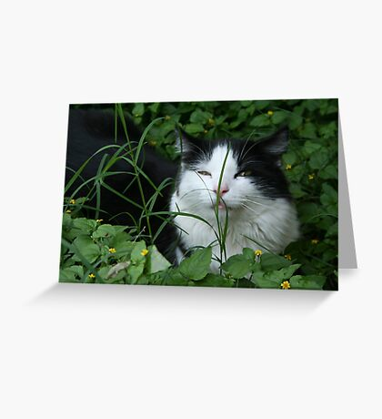 Fred Greeting Card
