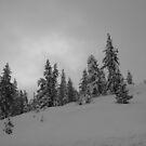 Snow Hills by NancyC