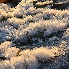 Ice crystals growing on the rock by christopher363