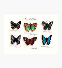 Nymphalidae butterflies Kunstdruck