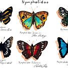 Nymphalidae butterflies von Barbara Baumann Illustration
