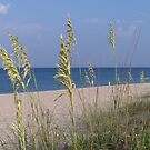 Sea Oats by DianaTaylor/ JacksonDunes