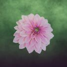 Pink Dahlia On Soft Green by hurmerinta