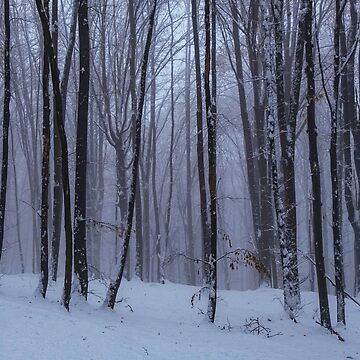 The perfect forest by monicamarcov