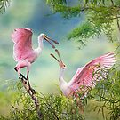 Roseate Spoonbill Juveniles by Bonnie T.  Barry