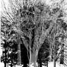 Gray-scale Forest von thekulkid