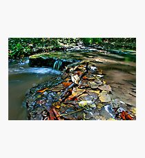 Up Stream Photographic Print