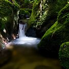 Shallow Water 1 by Michael Treloar