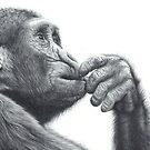 Brainstorm, chimpanzee pencil drawing by Peter Williams